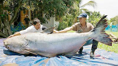 Weekly news for Biggest fish in the world